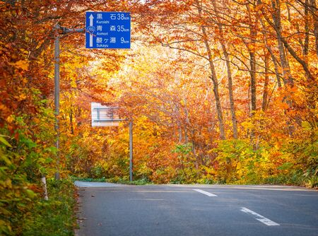 Hakkoda gold line the highway road number 109 in Aomori Prefecture during the fall trees along the road will gradually change the color according to the altitude of the area in travel concept 免版税图像