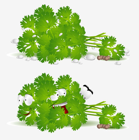 fresh coriander character on white background