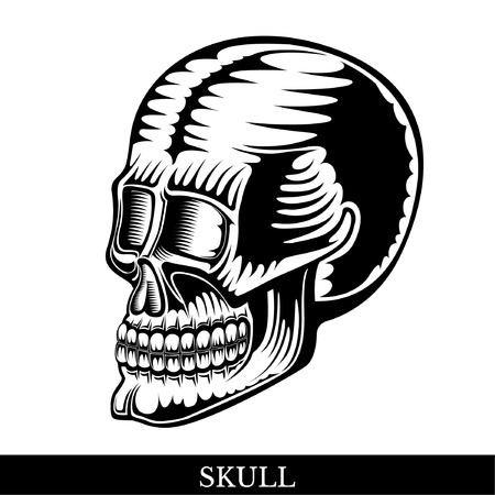 Black human skull half-turned view with a lower jaw