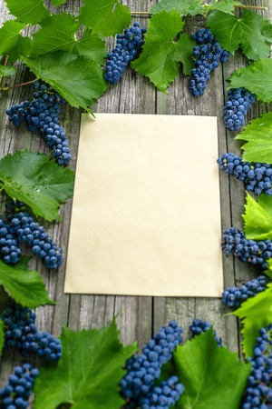 Vine with blue grapes and leaves around on vintage rustic wooden table. Old paper template in centre of background. Top view vertical background. 免版税图像