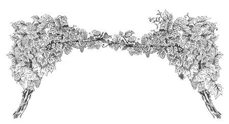 Arco da dell'illustrazione di vettore di schizzo disegnato a mano di orizzonte della vite isolata su white