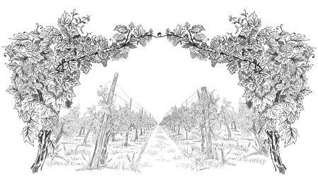 Arco di vite con paesaggio di vigneto. Fondo di vettore di schizzo orizzontale disegnato a mano isolato su bianco Vettoriali