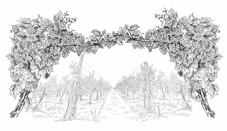 Arc from of grapevine with landscape of vineyard. Hand drawn horizontal sketch vector background illustration isolated on white
