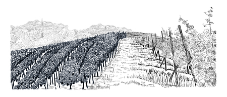 Hill of vineyard landscape with city on horizont hand drawn sketch Illustration