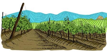 Paesaggio di vigneto con montagne e edificio sulla collina. Bordi disegnati a mano con sfondo colorato. Illustrazione vettoriale