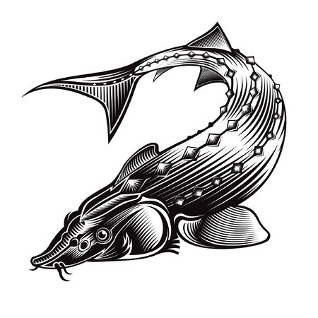 Sturgeon fish bend silhouette in engrving style. Logo for fishing, caviar label; menu and other business