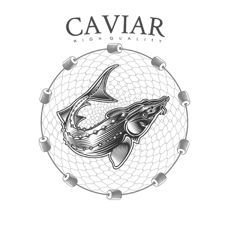 Sturgeon fish into round fishing nets engraving style. Logo for fish or caviar on white