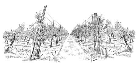Paesaggio di vigneto disegnato a mano schizzo orizzontale illustrazione vettoriale isolato su bianco