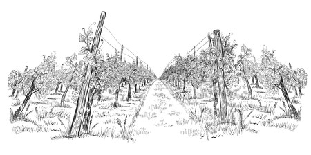 Vineyard landscape hand drawn horizontal sketch vector illustration isolated on white 写真素材 - 121733894