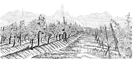 Vineyard landscape with grapes field and old town on background hand drawn sketch vector illustration isolated on white Ilustracja