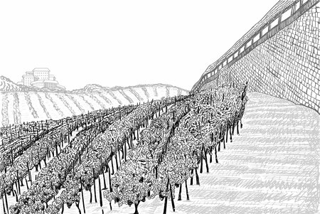 Vineyard landscape with building on the hill and castle wall. Hand drawn sketch vector illustration on white