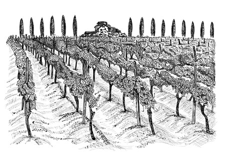 Vineyard landscape with building on the hill and trees beside. Hand drawn sketch vector illustration isolated on white