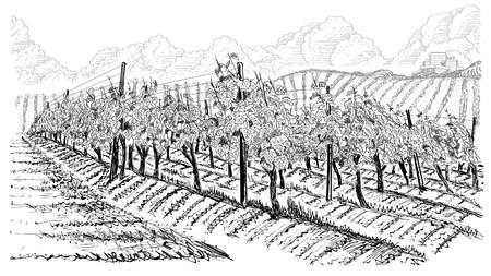 Paesaggio di vigneti con montagne e edificio sulla collina. Illustrazione vettoriale di schizzo disegnato a mano su bianco Vettoriali
