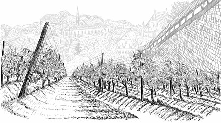 Vineyard landscape with old town in the valley and castle wall. Hand drawn sketch vector illustration on white
