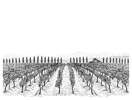 Vineyard landscape with building on the hill, mountains and trees beside. Hand drawn sketch vector illustration isolated on white