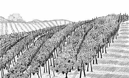 Paesaggio di vigneti con edificio sulla collina. Illustrazione vettoriale di schizzo disegnato a mano su bianco