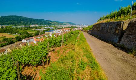 Vineyard on hill and old city with red roofs in the valley. Landscape top view