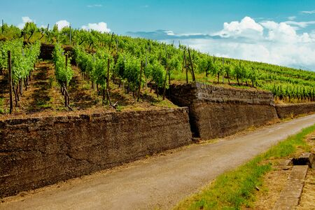 Landscape of vineyard on hill and road beside. Grape bushes on stone fence in sunny day.