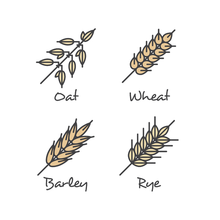 Isolated Vector Icon Style Illustration Set with Simple Porridge Cereals Icons: Oat Seeds, Rye, Wheat and Barley Healthy Breakfast Vector Concept. Food Icon.