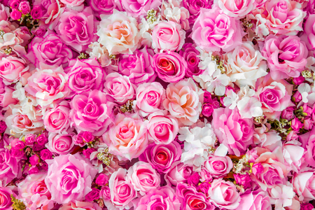 beautiful rose: Soft color Roses Background