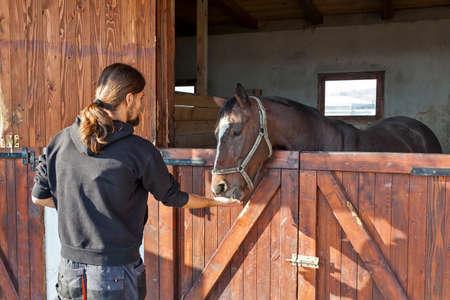 hippodrome: English thoroughbred racehorse in box at ZOO Bor, Serbia, hippodrome, photo taken 23.10.2013.
