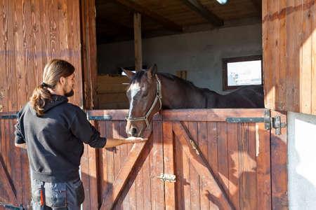 hippodrome: English thoroughbred racehorse in box at ZOO Bor, Serbia, hippodrome, photo taken 24.10.2013.