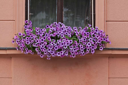 colorfu: flowers in the window of the old building