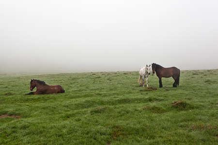 silueta humana: Caballo en el prado en la niebla sobre la hierba cubierta de roc�o