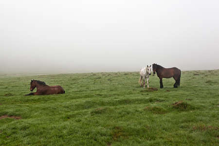 autumn horse: Horse in the meadow in the mist on the grass covered with dew