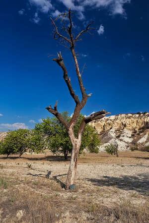 lifeless: Lifeless tree in a desert Stock Photo