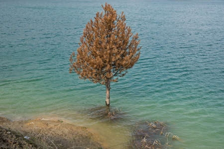 drowned: Drowned  pine wood rotting in the lake with blue and green water Stock Photo