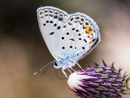 White buterfly on flower