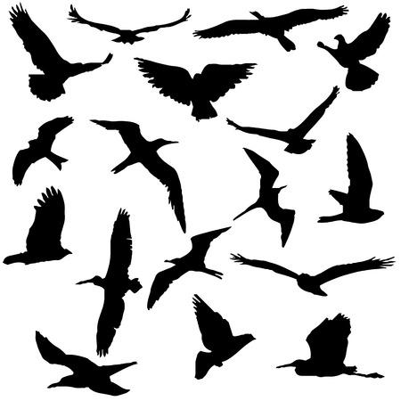 Vector Collection of Bird Silhouettes. Иллюстрация