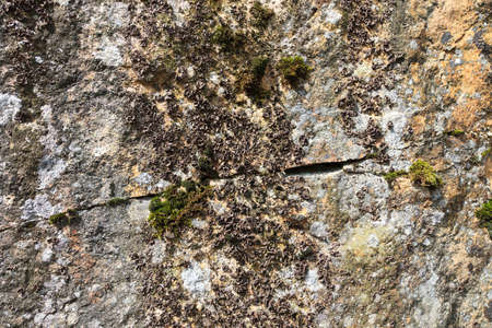 mustiness: Rock wall with mould and moss