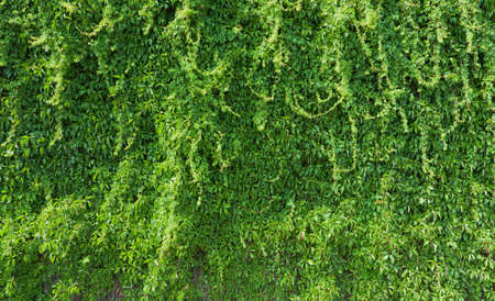 Green plant on a brick wall Stock Photo - 12128552