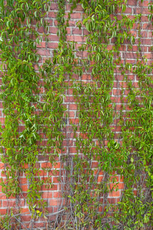 Green plant on a brick wall photo