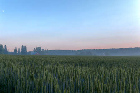 Wheat fields as sun is setting down photo