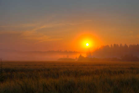 Red sundown over and foggy wheat field and forest photo