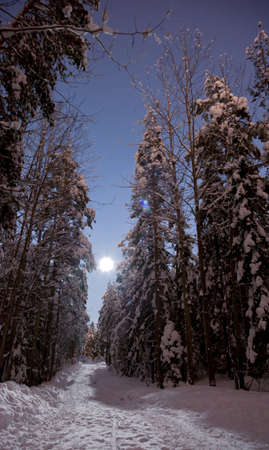 Moon shining on a clear winter night in a forest road photo
