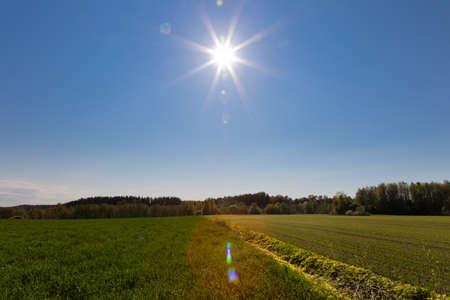 treeline: Green farmland on a egde of a forest