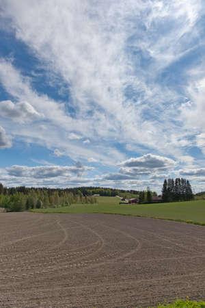 treeline: Farmland on early summer