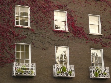 Red Ivy on grey building photo