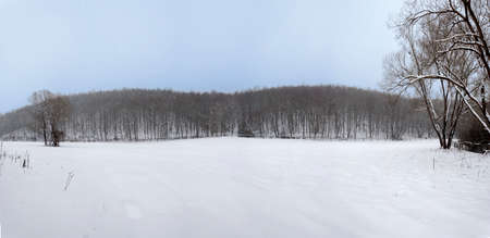 winter forrest panorama photo
