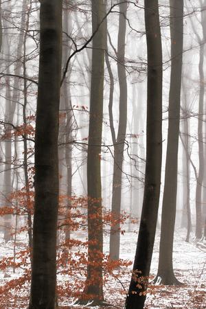 Bäume, die als Silouhettes im Schnee stehen