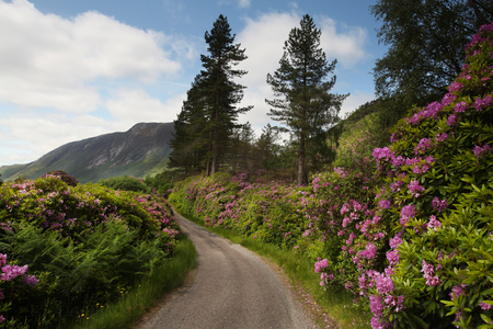 Scottish landscape with purple flowers in the foreground Stok Fotoğraf