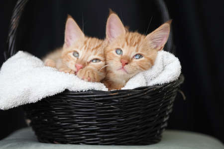 Little kittens playing with flowers and sleeping in a basket
