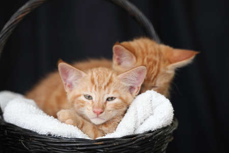 Little kittens playing with flowers and sleeping in a basket Standard-Bild
