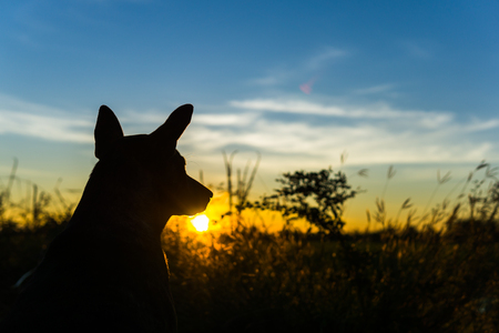 the dog and sunrise