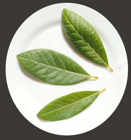 Fresh bay-laurel leaves begin to dry on a plate.