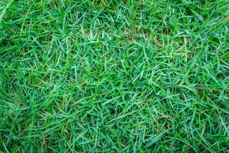 Close-up image of green grass